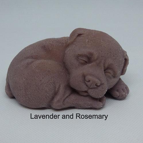 Sleepy Dog - Various Scents