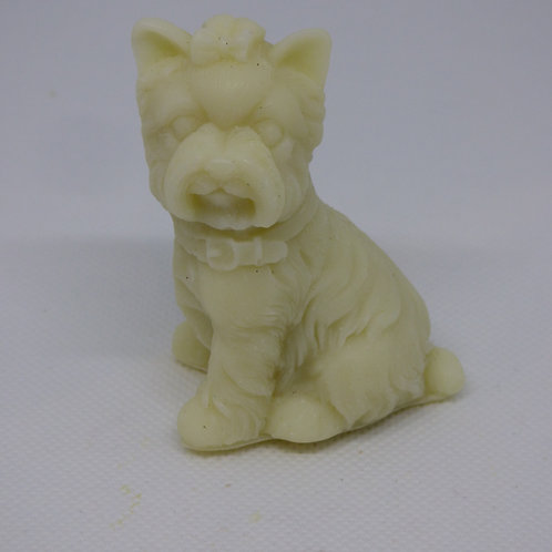 Yorkshire Terrier - Various Scents