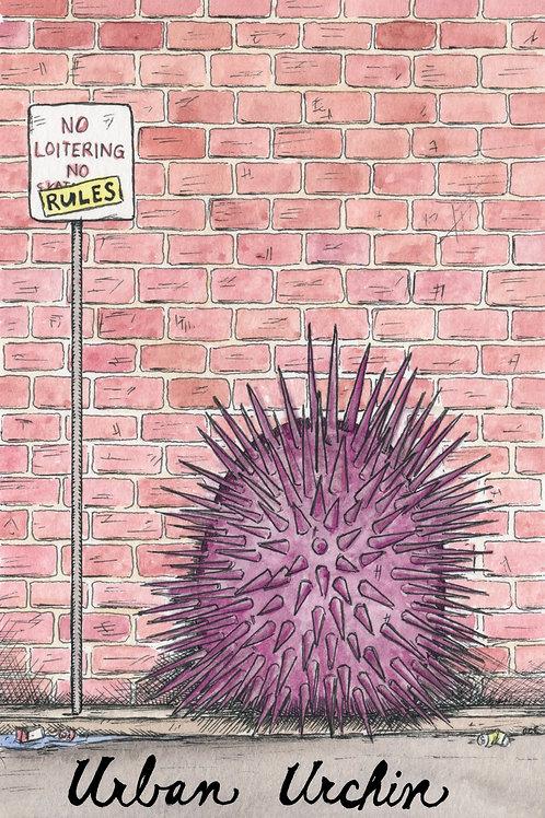 Urban Urchin