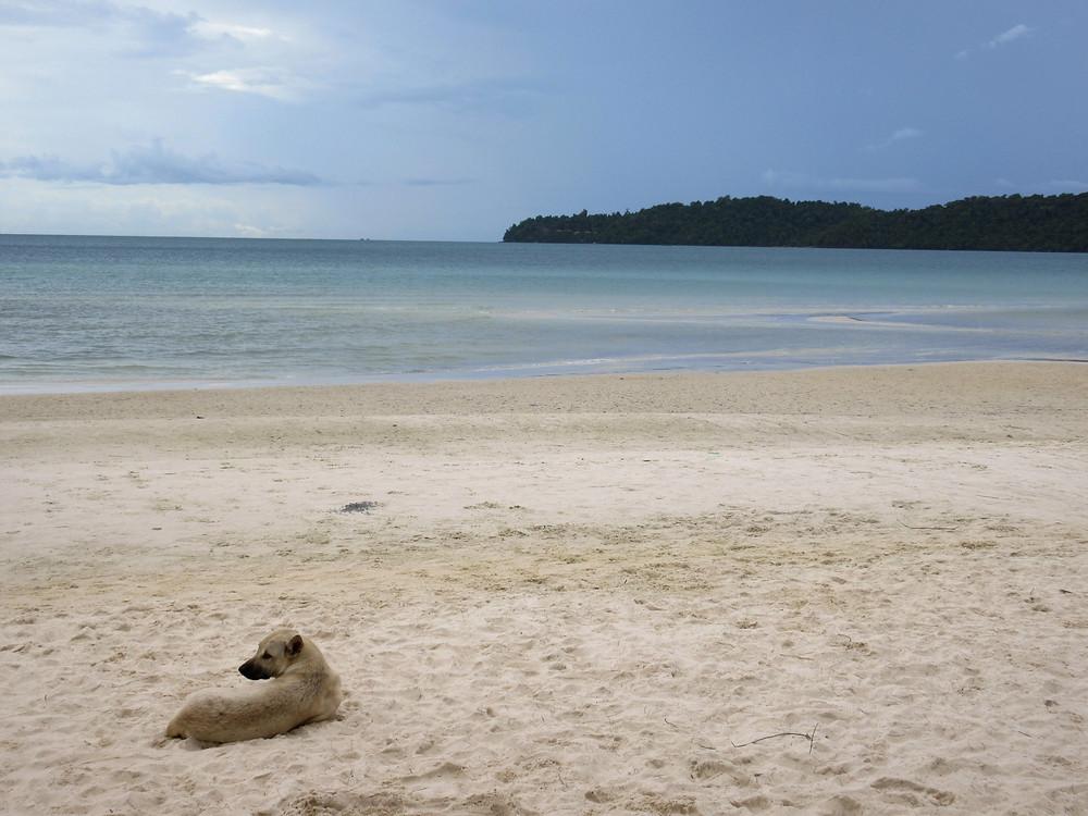 Koh Rong Sanloem, tropikalna wyspa, Kambodża, plaża, pies