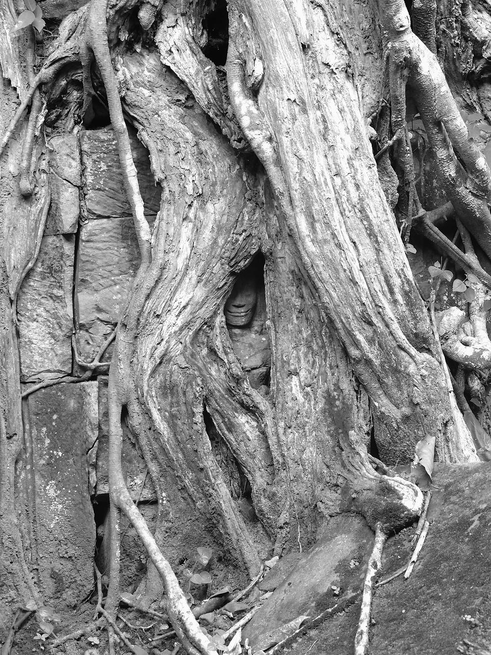 Czarno-białe zdjęcie płaskorzeźby, twarz Buddy zarośnięta drzewami w Angkor Wat, Siem Reap, Kambodża