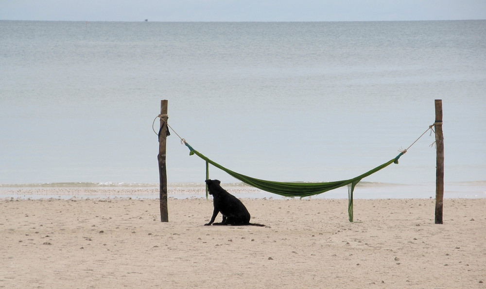 Koh Rong Sanloem, pies, hamak, plaża, widok