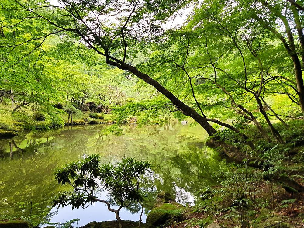 Japoński ogród wyglądający na dziki, z drzewami, krzewami oraz stawem