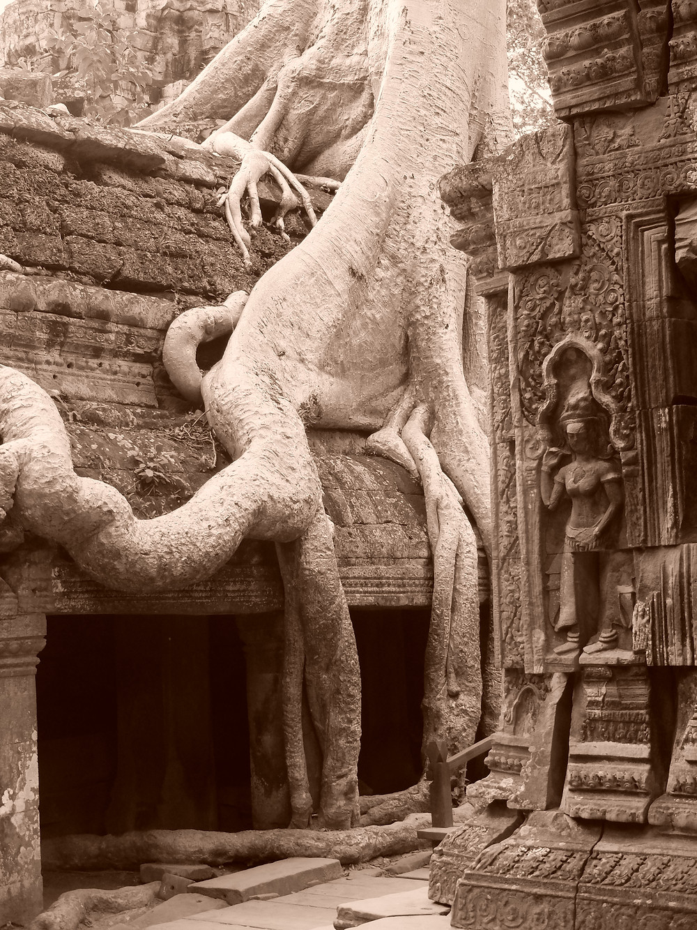 Drzewo rosnące na murach świątyni Ta Prohm w Angkor Wat, płaskorzeźba appsary w kamiennej ścianie