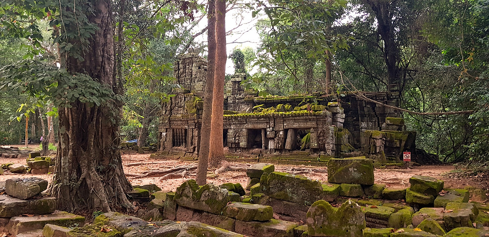 Ruiny śwątyni khmerskiej porośnięte drzewami w Angkor Wat