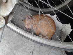 Kociak śpiący w cieniu