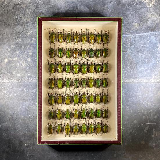 Cadre scarabées