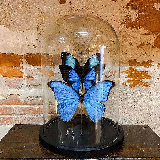Composition de trois papillons