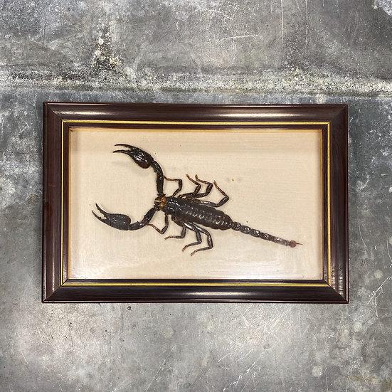 Cadre scorpion
