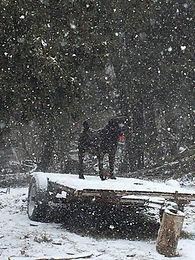 Bella in the snow.jpg