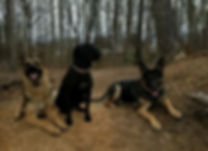3 dogs cropped.JPG