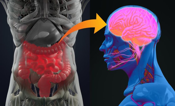 Gut Bacteria and Neurological Disorders like Parkinson's