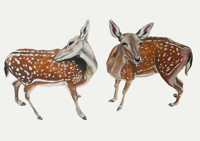 Deer cut out2.jpg
