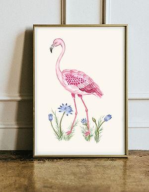 Flamingo Visual.jpg