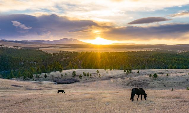 montanasunrise_horses_wix.jpg