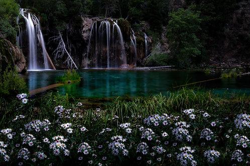 Hanging Lake Flowers 2