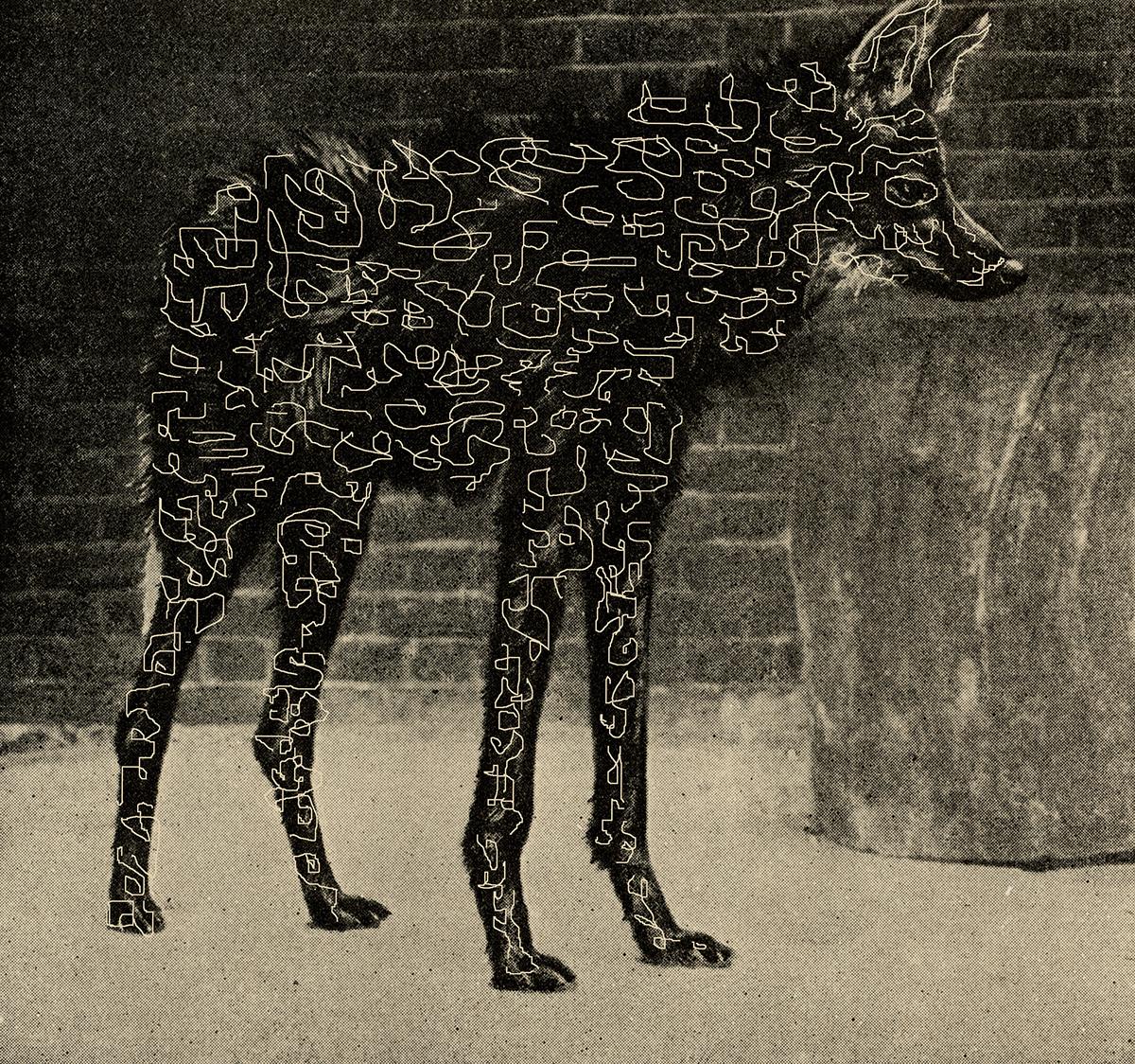 Wolflines