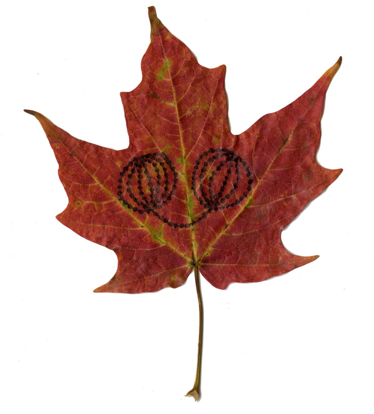 Drawings on Leaves