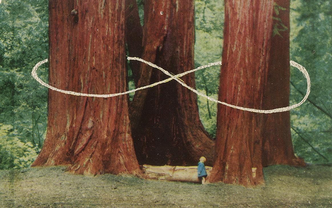 Carved Postcard . Sequoias
