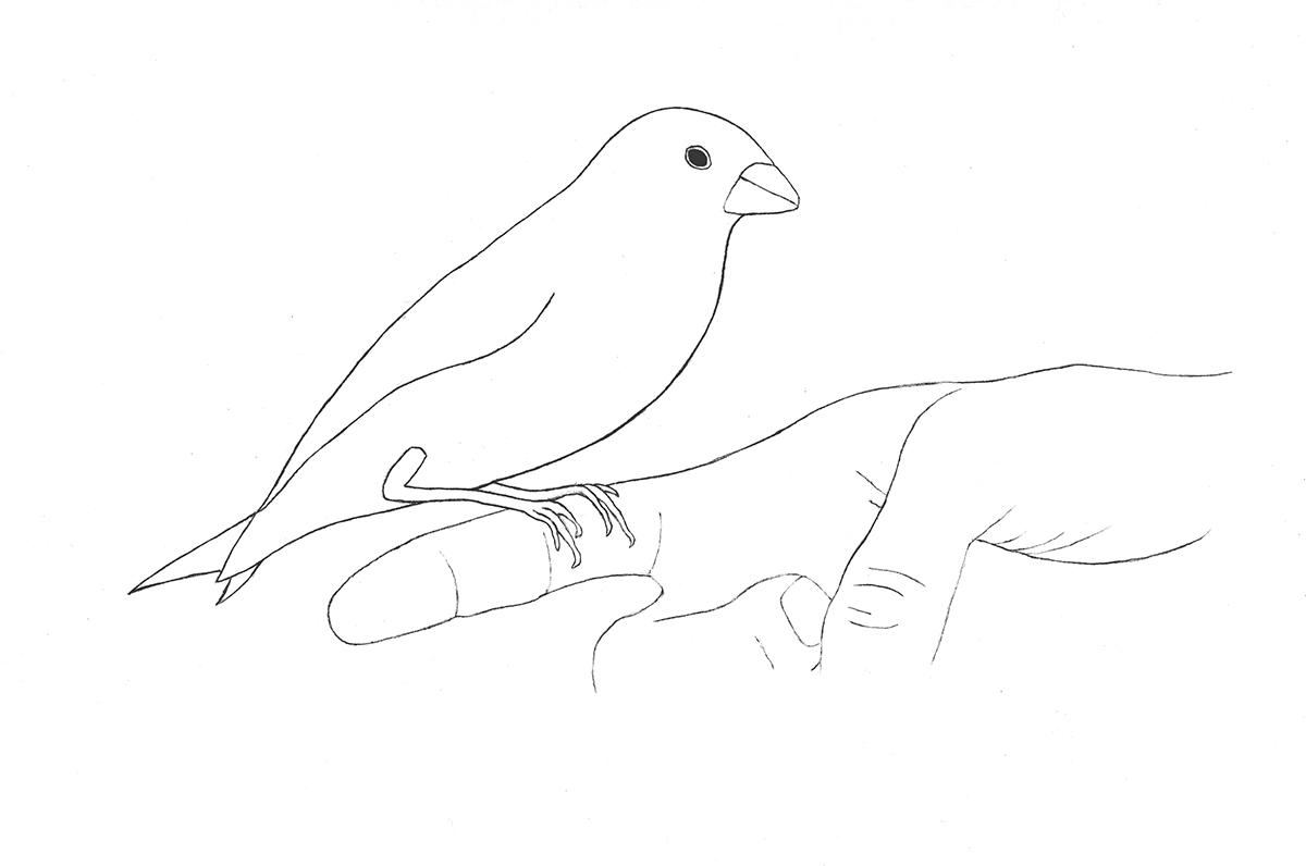 Empathy Series . Bird