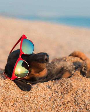 cani-spiaggia-compressed_edited.jpg