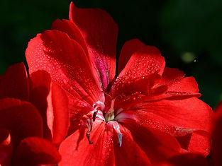 sexy_red.jpg