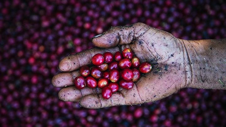 México Chiapas Finca El Cielito  - Organic Microlot