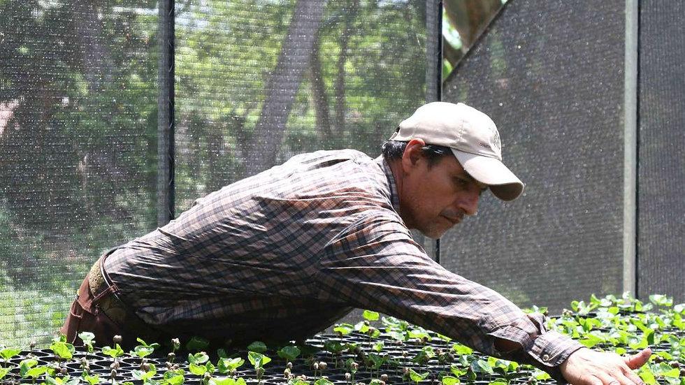 México Chiapas Finca Santa Gloria  - Organic Microlot