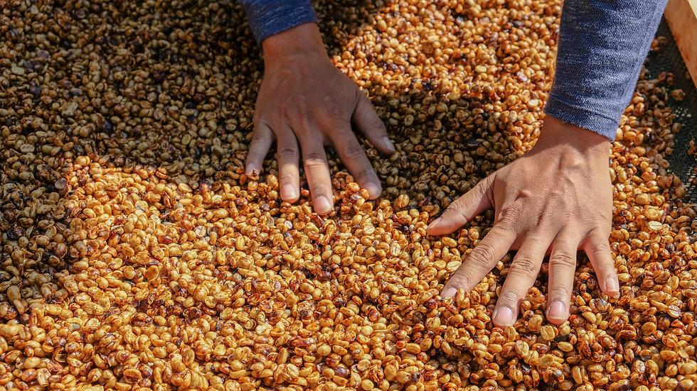 "Costa Rica Las Lajas ""Honey""  - Organic Microlot"