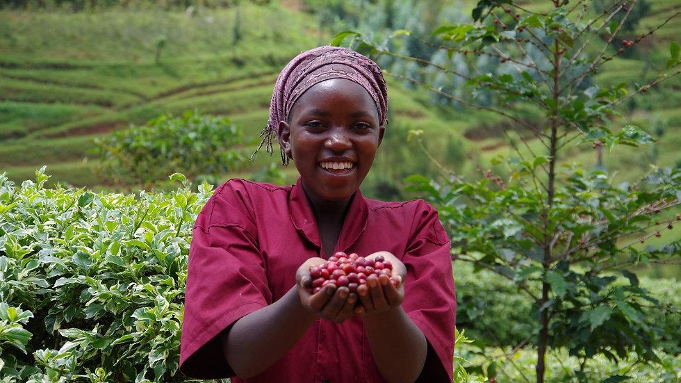 Rwanda Kirorero - Organic Microlot
