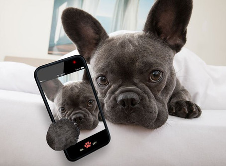 How to Make Your Dog Instagram Famous!