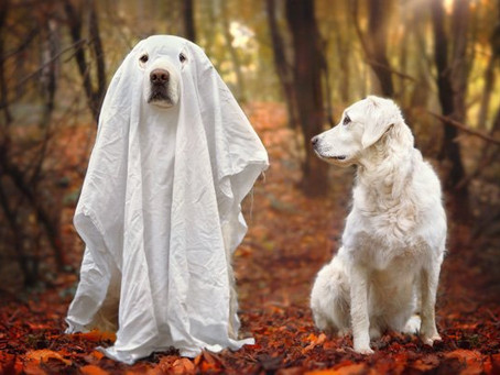 Can Dogs See Ghosts and Other Supernatural Beings? Find Out The Spooky Facts
