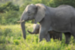 tanzania wildlife photography safari elephants