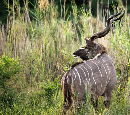 Nyala  South Africa Safari Tripod Travelers