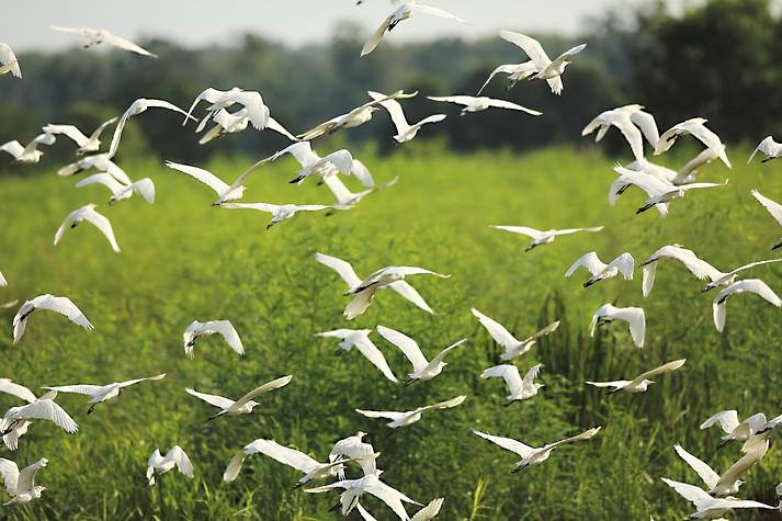Birds in Flight Savannah GA