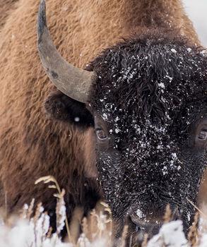 Yellowstone Winter Photogaphy Workshop