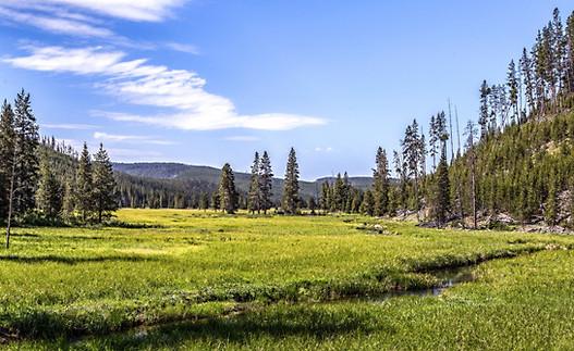 Landscape Yellowstone National Park