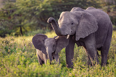 Elephants Tanzania Photography Workshop