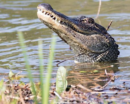 Alligator Savannah Photpgraphy Workshop