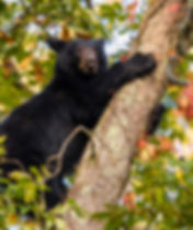 Smoky Mountains Fall Photography Worshop