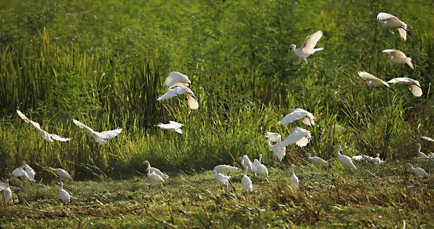 Birds in FlightSavannah GA