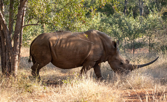 White Rhino South Africa Photography Workshop