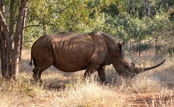 South Africa Safari   United States   Tripod Travelers