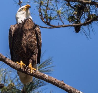 Eagle Photography Workshop