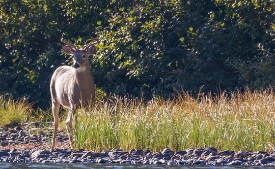 Deer Glacier National Park