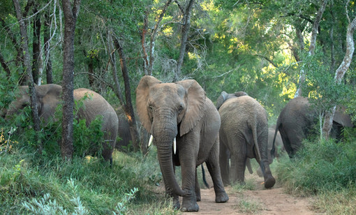 Elephants South Africa Photography Workshop