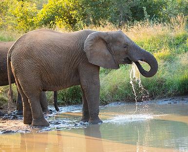 South Africa Photography Safari Elephant