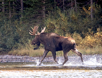 Moose Glacier National Park