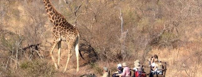 South Africa Safari Photography Workshop Giraffe
