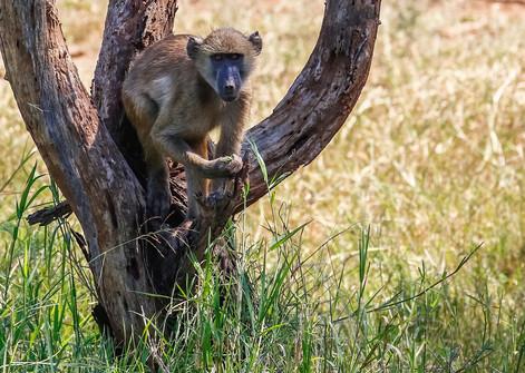 Baboon Cheetah South Africa Photography Workshop Safari